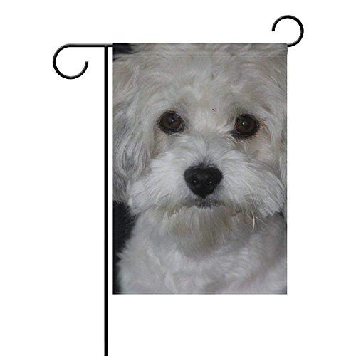 - Yunnstrou White Dog Cute Bichon Frise Garden Flag Waterproof Polyester Yard Flag House Flag Decoration Double Sided Flag 12 x 18 Inch