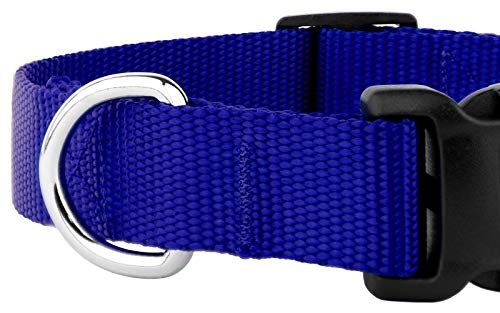 Country Brook Petz - 25+ Vibrant Colors - American Made Deluxe Nylon Dog Collar with Buckle (Extra Large, 1 Inch Wide, Bright Royal Blue)