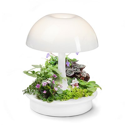 Ambienta Living Table Lamp by sagegreenlife