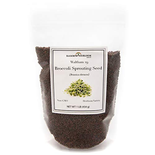Broccoli Sprouting Seeds for Broccoli Sprouts & Microgreens | Waltham 29 Variety | Non GMO Heirloom Seeds | 1 LB Resealable Bag | Perfect for Sprouting Jar & Seed Tray | Rainbow Heirloom Seed Co. (Best Broccoli Seeds For Sprouting)