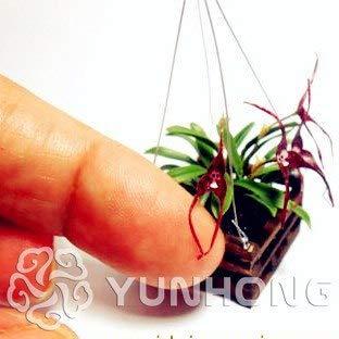 Pinkdose 100 STÜCKE Mini Orchidee-Bonsai BLUME Bonsai Für Hausgarten Phalaenopsis Orchidee Bonsai Kaufen-Direkt-Von-China O