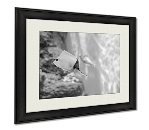 Ashley Framed Prints The Yellow Longnose Butterflyfish Forcipiger Flavissimus Or Forceps, Wall Art Home Decoration, Black/White, 34x40 (frame size), AG6403231 by Ashley Framed Prints
