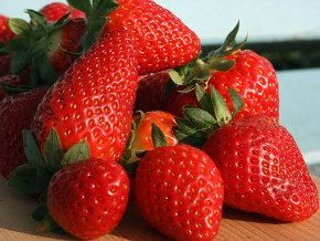 Erdbeeren 'Honeoye' - Fragaria 'Honeoye' - 12 Pflanzen im Topf
