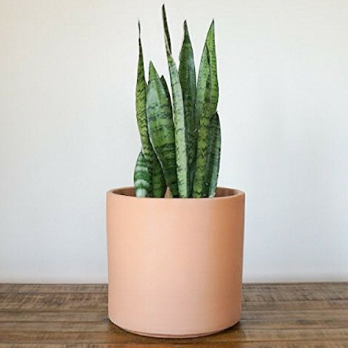 Large Blush Clay Planter | Plant Pot | Indoor Planter | Ceramic Cylinder | Plant Container| Garden Planter | Perfect for Indoor Plants, Succulents, House Plants & Plant Stands (8 inch, Blush)