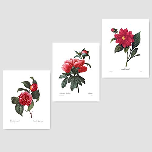 (Set of 3) Red Flower Prints (Chic French Room Decor, Redoute Home Botanical Wall Art) Camellia Peony Dahlia - Unframed