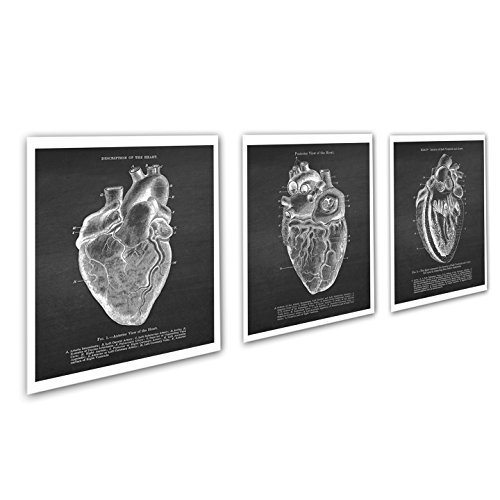 Heart Human Art (Gnosis Picture Archive Anatomy Art set of 3 unframed Vintage Textbook Illustrations of Human Heart Anatomy_Heart_Chk3A)