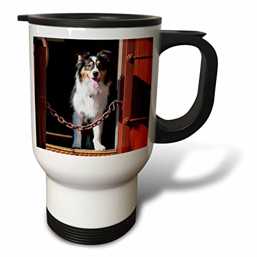 danita-delimont-dogs-australian-shepherd-in-a-train-car-14oz-stainless-steel-travel-mug-tm-230324-1