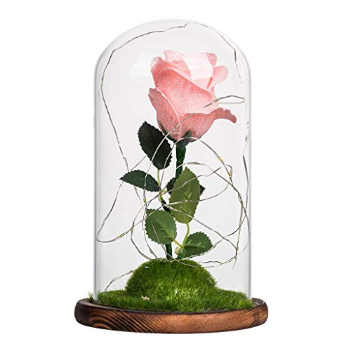 Inspired Dome (Enchanted Rose that Lasts Forever in Glass Dome Inspired By Disney Beauty and the Beast Belle by Magic Princess)