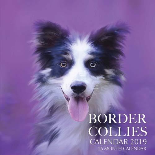 Border Collies Calendar 2019: 16 Month Calendar