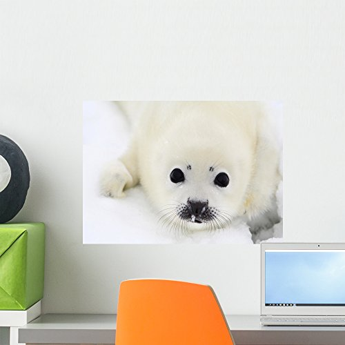 - Wallmonkeys Baby Harp Seal Pup on Ice of The White Sea Wall Decal Peel and Stick Graphic WM315790 (18 in W x 13 in H)
