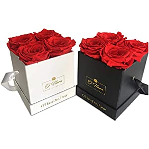 O'Hara Des Fleur Preserved Rose, Real Flowers | Handmade Flowers in a Box | Natural Fragrance, Color, and Style Up to 1 Year | Best Gift for Her, Birthday, Anniversary, Graduation Gift 24