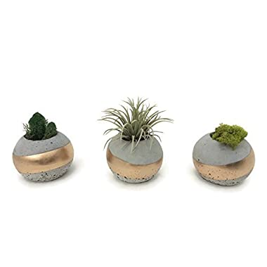 ORB Concrete Succulent Planters. Set of 3. GOLD