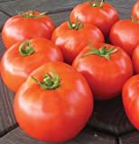 Beefsteak Tomato Mountain Merit D3080A (Red) 10 Hybrid Seeds by David's Garden Seeds