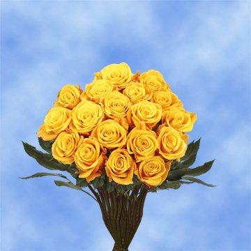 GlobalRose 50 Fresh Cut Dark Yellow Roses - Conga Roses Fresh Flowers For Birthdays, Weddings or Anniversary.
