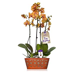 Hallmark Flowers Orchid 12