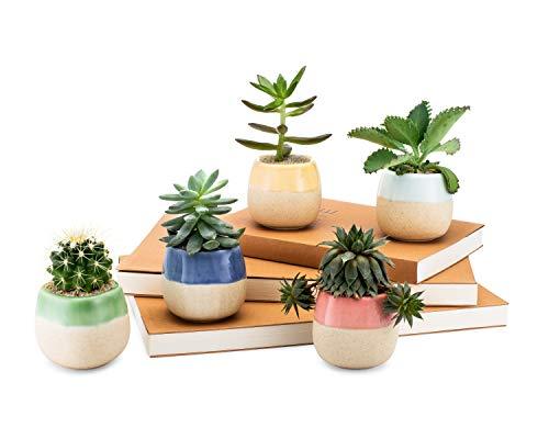 Succulent Planters by Succulent Boss | Succulent Pots for Plants and Cacti | Small Plant Pots for Mini Succulent Plants and Succulent Seeds | 5 Piece Planter Set of 2.6 Inch Ceramic Flowing Glaze Pots