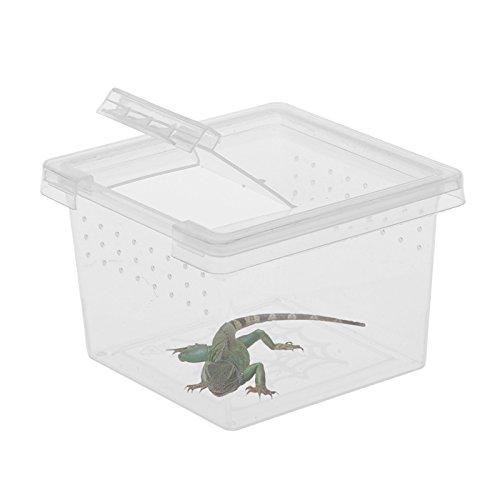 taonmeisu Kleine Animal Keeper transparent Kunststoff Box Tank mit Loch belüftet Tragegriff Insekten Spinnen Reptilien Live Lebensmittel