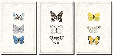 Amazon Com Wall26 3 Panel Canvas Wall Art Multiple Butterfly Species Artwork Series Giclee Print Gallery Wrap Modern Home Art Ready To Hang 16 X24 X 3 Panels Posters Prints