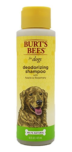 Shampoo Odor Dog Dog (Burt's Bees for Dogs All-Natural Deodorizing Shampoo with Apple and Rosemary | Best Odor Eliminating Shampoo For All Dogs and Puppies, 16 Ounces)