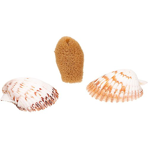 petco-hermit-crab-sponge-shell-dishes-pack-of-2-shells-and-1-sponge