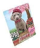 Doggie of the Day Rosie 25 Cent Kisses Weimaraner Dog Blanket BLNKT125769 (50x60 Sherpa)