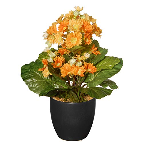National Tree Potted Primula Plant, 12 Inch, Multi