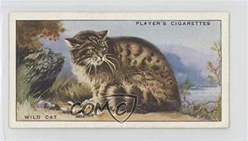Wild Cat (Trading Card) 1939 Player's Animals of the Countryside - Tobacco [Base] #18 from Player's Animals of the Countryside