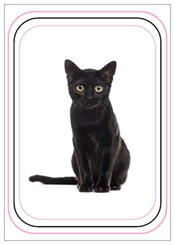 NW Pitney Ink Black Cat Relax Birthday Card, 5 x 7