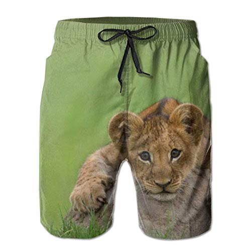 ZQKCMY Lion cub Stone Lying Mens Summer Swim Trunks 3D Graphic Quick Dry Funny Beach Board Shorts with Mesh Lining, Size L