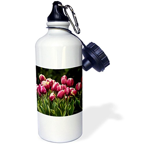 Danita Delimont - Flower - A cluster of red and white tulips with yellow and green striped leaf - 21 oz Sports Water Bottle (wb_227742_1) (Variegated White Tulip)