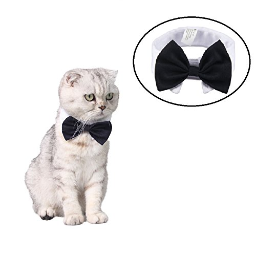 Stock Show Pet Dog Cat Classic Formal Cotton Bow Tie Neck Tie Wedding Party Tuxedo Dog Collar, S, (Dapper Dog Pet Costumes)