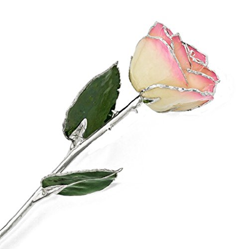 Roxx Fine Jewelry Silver Trimmed Pink and Cream Rose Real Long Stemmed Rose Many Colors 12