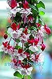 Hot Sale! 200pcs Fuchsia Flower,lantern flower seeds,Bell Flower, Lantern Begonia,bonsai flower seeds,plant for home & garden
