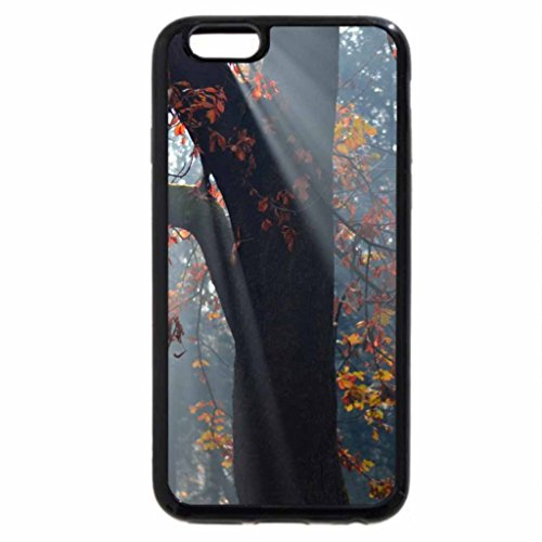 iPhone 6S / iPhone 6 Case (Black) Leaves Bathed in Light