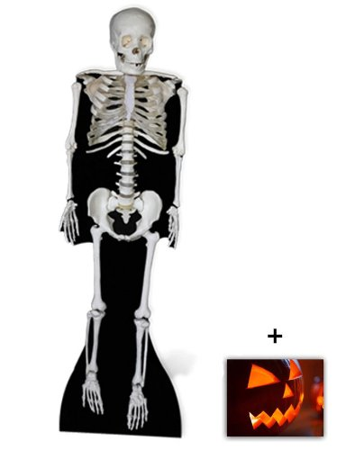 Skeleton - Horror/Halloween Lifesize Cardboard Cutout / Standee / Standup - Includes 8x10 (20x25cm) Star Photo