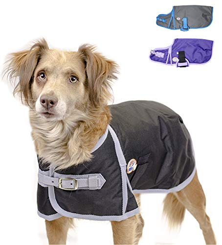 Derby Originals Horse Tough 600D Waterproof Ripstop Dog Coat with 1 Year Warranty - Medium Weight 150g Polyfil & No Rub Breathable Lining  - Solid Design in Multiple Colors & Sizes (Best Dog Breeds For Cold Weather)