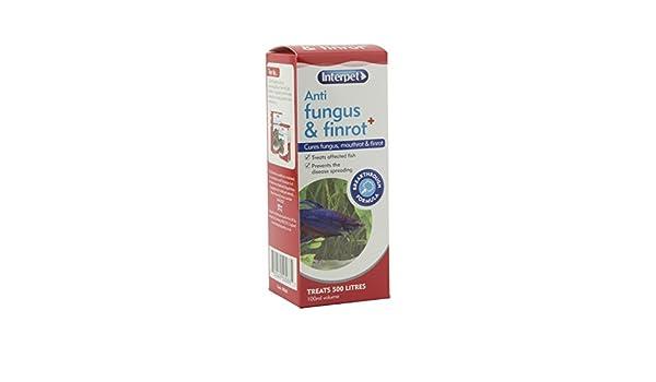 Interpet Anti Hongos Tratamiento para Peces de Acuario Finrot, 100ml.: Amazon.es: Productos para mascotas