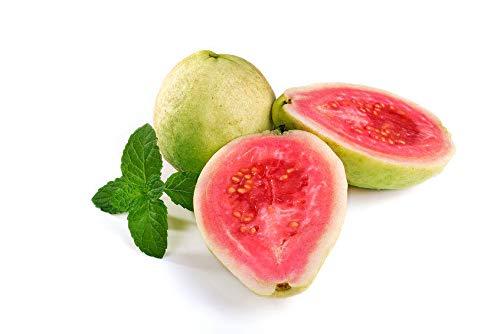 Tropical Apple Guava Psidium guajava Seeds Abundant Fruit Fast Easy to Grow 10 Seeds 1st Class with Tracking