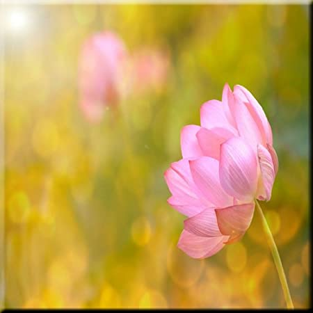 Rikki Knight Pink Lotus Flower On Yellow Background Design Art