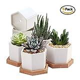Succulent Plant Pots,OAMCEG 2.75 inch Succulent Plant Pots,Set of 6 White Ceramic Succulent Cactus Planter Pots with Bamboo Tray