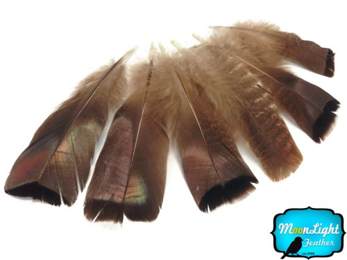 (Wild Turkey Natural Bronze Tail Feathers - 5 Pieces)