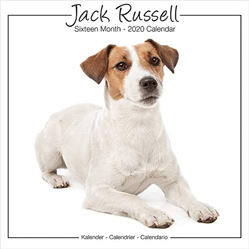 Jack Russell Calendar - Jack Russell Terrier Calendar - Dog Breed Calendars - Calendars 2019 - 2020 Wall Calendars - 16 Month Wall Calendar by Avonside Studio (Multilingual Edition)