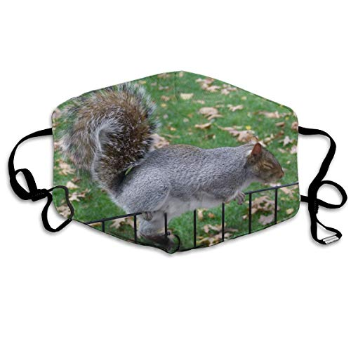 Squirrel Park Anti Dust Breathable Face Mouth Mask for sale  Delivered anywhere in Canada