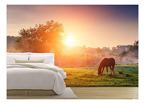 Arabian Horses Grazing on Pasture at Sundown in Orange Sunny Beams
