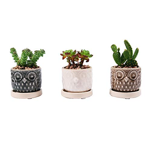 Sungmor Mini Enamel Ceramic Owl Succulent Pots | White & Green & Brown 3PC Cute Planter | Cactus Plant Container | Modern Flower Pot Houseplant Holder with Drainage & Saucer | Indoor Outdoor Decor