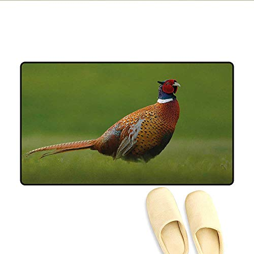 - Door-mat,Common Pheasant with Long Tail on The Green Grass Meadow Habitat Czech Republic,Bath Mats for Floors,Green Orange Red,Size:20