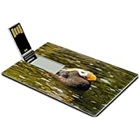 Luxlady 32GB USB Flash Drive 2.0 Memory Stick Credit Card Size A Tufted Puffin bird relaxing in a pool of water IMAGE 21157871