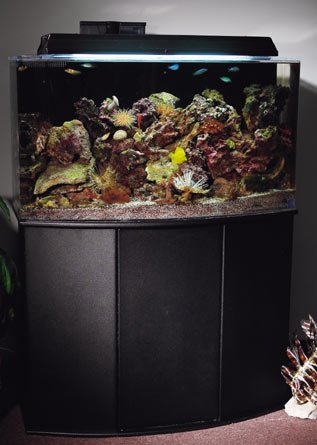 Aquatic Fundamentals 30/38/45 Gallon Upright Aquarium Stand, Black by Aquatic Fundamentals