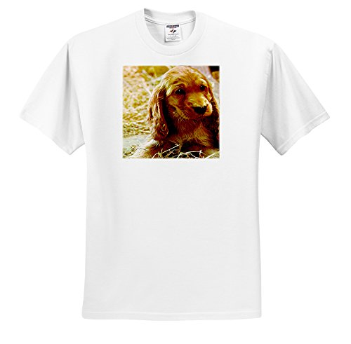 Dogs Irish Setter - Irish Setter Puppy - T-Shirts - Youth T-Shirt Small(6-8) (Setter Youth T-shirt)
