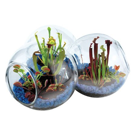 Dunecraft Carnivorous Fascinations Science Kit